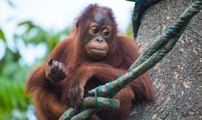 Palmolja och regnskogsskövling
